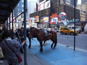 タイムズスクエアに馬